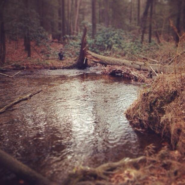 Stony Creek on Black Friday