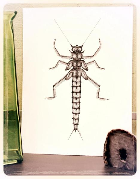 Salmonfly nymph