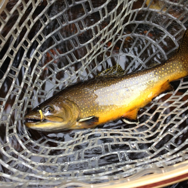 Andy's first brook trout of the night, caught on a CB Stocker he tied a few days before.