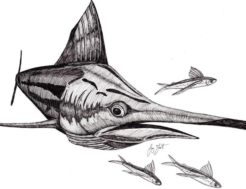 """""""Bill Fish."""" ©Jay Talbot"""
